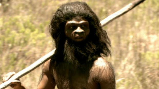 800,000 years ago, evolutionary adaptations set Homo Erectus on the road to becoming human and give them the advantage over their competitors.