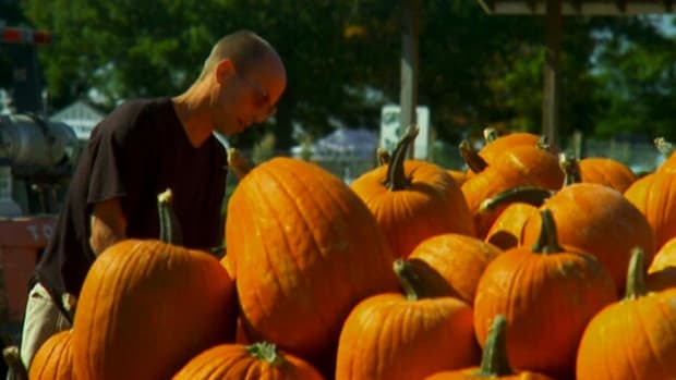 Steve Clark, the world's fastest pumpkin carver, takes us through some of his more intricate carvings.