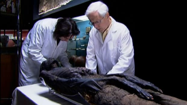 Archaeological chemist Stephen Buckley found that many of the substances used for mummification were foreign imports. He determined that an ancient trade network once existed, stretching across 4,000 miles.
