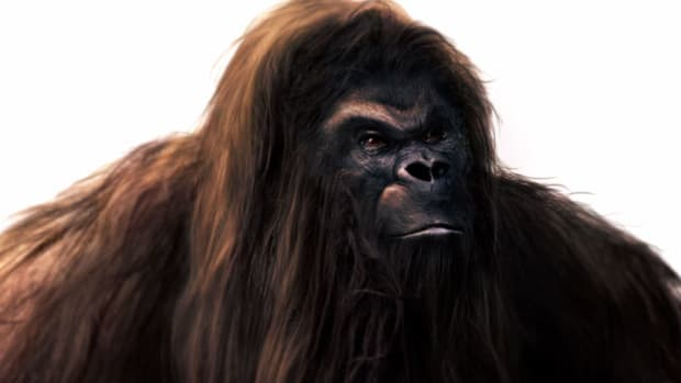 Could Bigfoot be descended from the prehistoric giant ape known as Gigantopithacus?