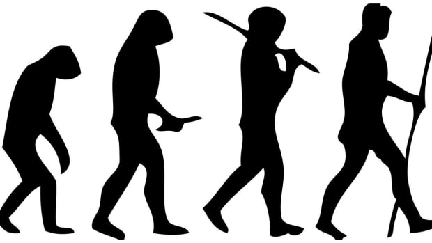 hith-early-humans-upright-2