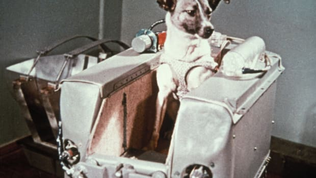 ask-animals-in-space-170983471-2