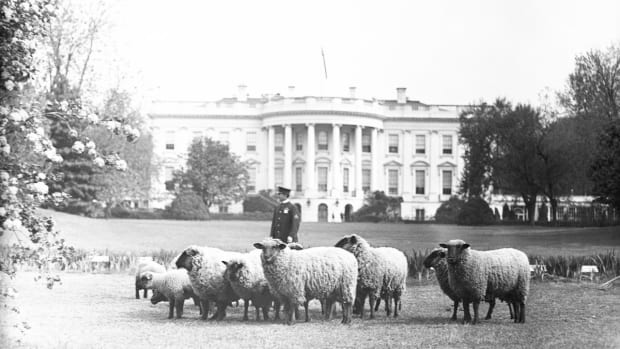 list-wartime-conservation-white-house-sheep-2