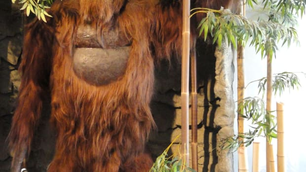 gigantopithecus_blacki_model_-_san_diego_museum_of_man_-_cropped-2