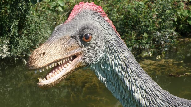 hith-dinosaur-egg-study-suggests-new-evolutionary-link-with-birds-2