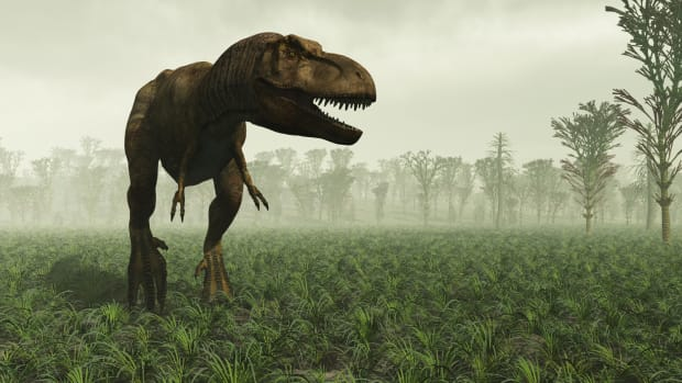 ask-history-what-killed-the-dinosaurs_istock_000012264243medium-2