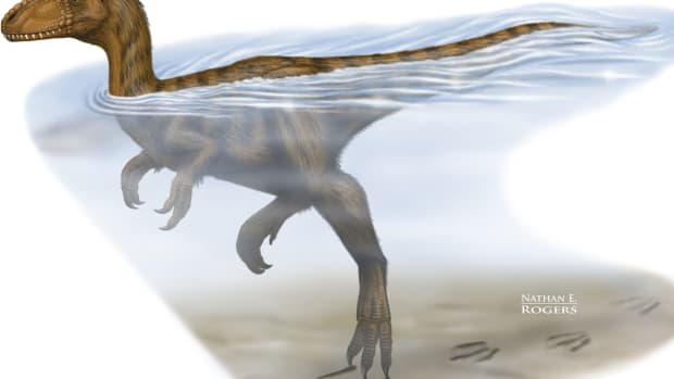hith-dinosaurs-were-strong-swimmers-study-suggests-2