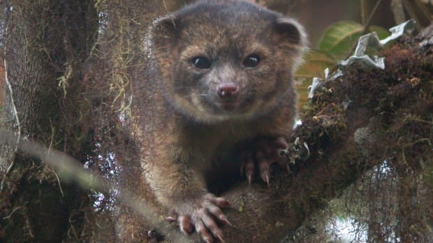 hith-new-mammal-discovered-2