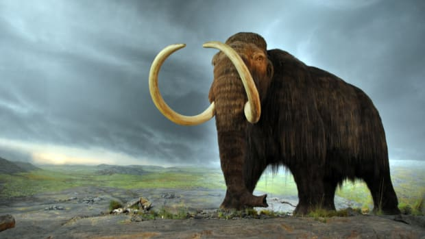 hith-woolly_mammoth-2