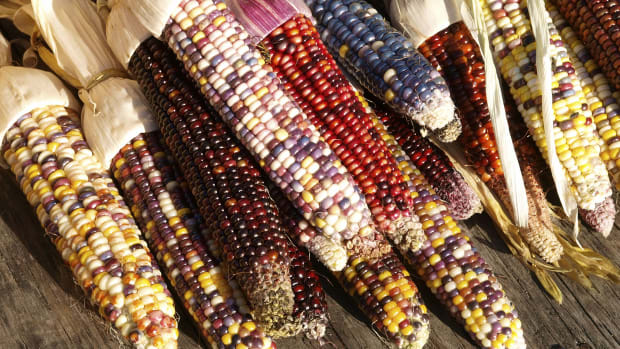 hungry-history-indian-corn-a-fall-favorite-2