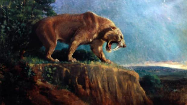 hith-saber-toothed-killer-2