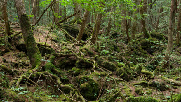 list-7-historic-haunts-aokigahara-forest-505991655-2