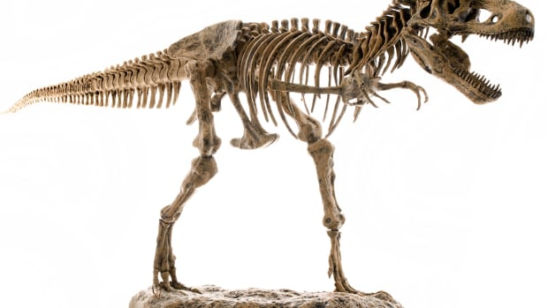 hith-dinosaur-sites-under-siege-by-poachers-2