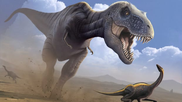 After an Asteroid Killed the Dinosaurs, Underwater Life