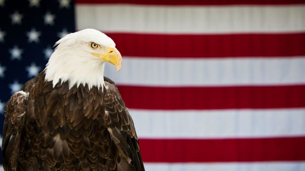 ask-bald-eagle-istock_000017215186large-2
