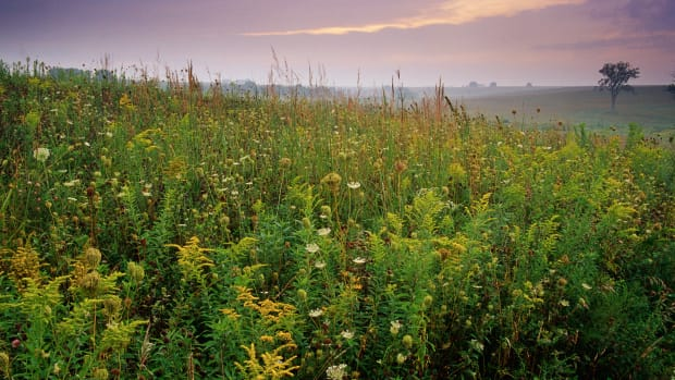 23 Aug 2000, Prairie City, Iowa, USA — Grasses in Prairie — Image by © Tom Bean/CORBIS