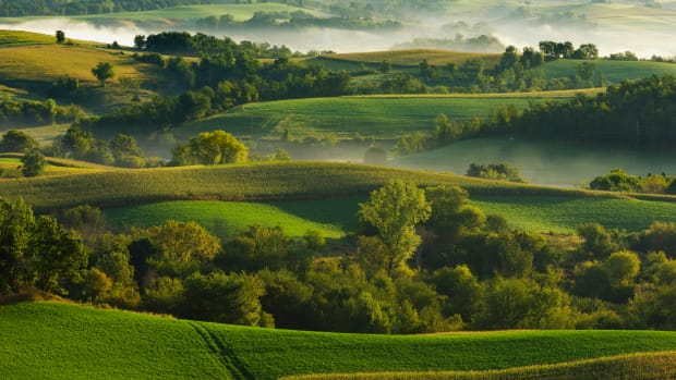 Wisconsin, USA — Low Morning Fog Over Alfalfa and Corn Fields — Image by © Scott Sinklier/AgStock Images/Corbis