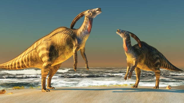 85 'Incredibly Detailed' Dinosaur Footprints Discovered in ...