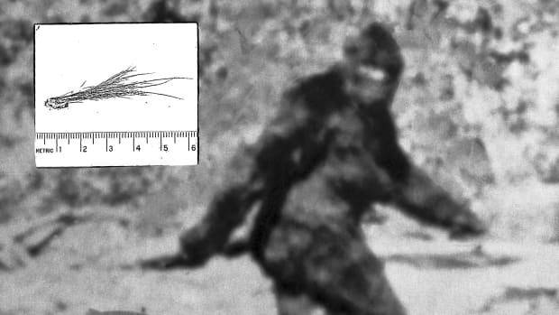 Bigfoot hoax