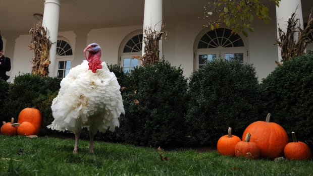 Turkey-Pardon-GettyImages-83841704