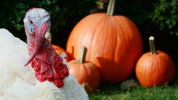 HISTORY: Thanksgiving Fact or Fiction