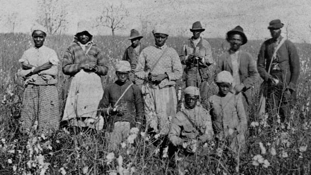 African American cotton pickers in Florida, 1879