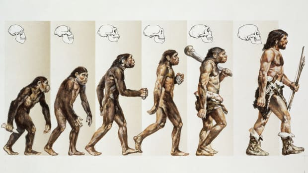 How Did Humans Evolve?