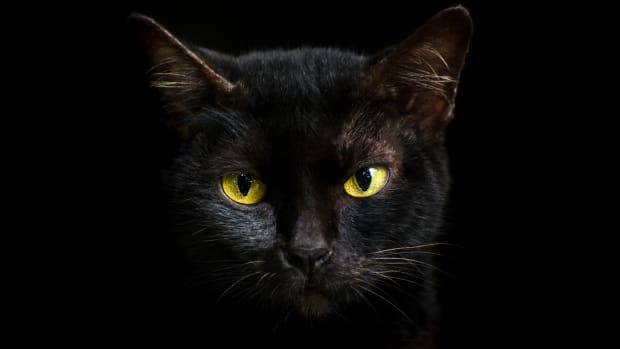 Why Black Cats Are Associated with Bad Luck