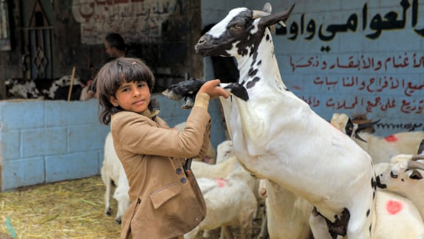 """A boy holds the front legs of a goat at a livestock market in Yemen's capital Sanaa on July 14, 2021, as people buy provisions in preparation for the Eid al-Adha holiday celebrations. - Known as the """"big"""" festival, Eid Al-Adha is celebrated each year by Muslims sacrificing various animals according to religious traditions, including cows, camels, goats and sheep."""