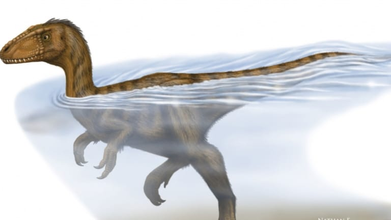 Dinosaurs Were Strong Swimmers, Study Suggests