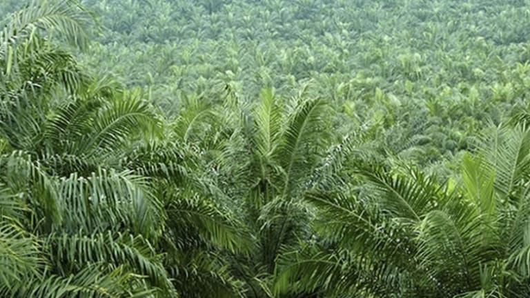 Ancients First Ate Palms, Not Rice