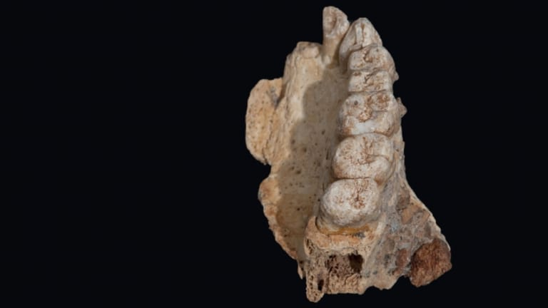 Stunning New Fossil Suggests Humans Left Africa Far Earlier Than We Thought