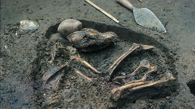 Early Americans Buried Their Dogs Like Family