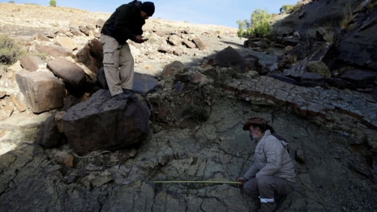 Largest-Ever Carnivorous Dinosaur Footprint Discovered in Bolivia