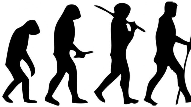 Did Early Humans Stand Upright to Punch Better?