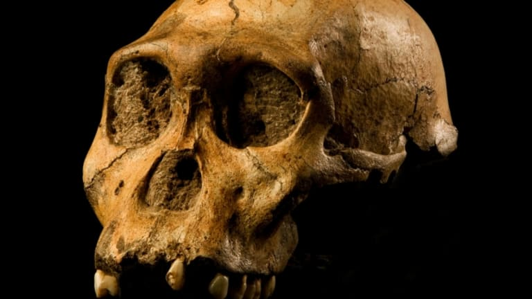Human Traits May Not Have Evolved All At Once, Scientists Say