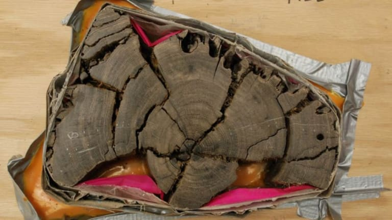 Tree Rings Solve World Trade Center Ship Mystery