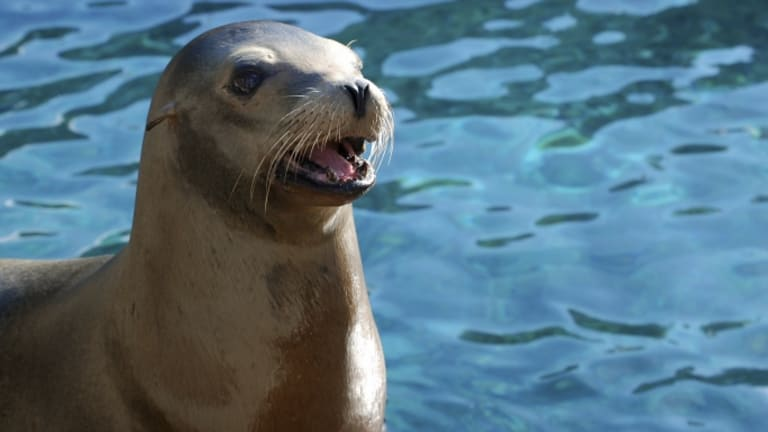 Ancient DNA Suggests Seals Brought Tuberculosis to New World