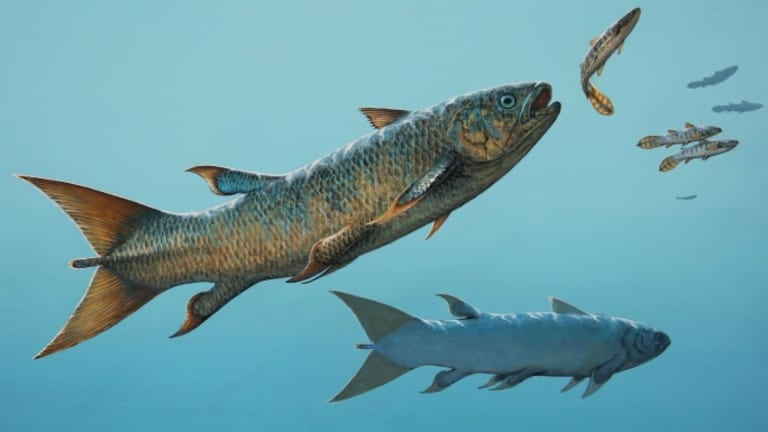 Killer Fish Rebellatrix Not Your Typical Coelacanth