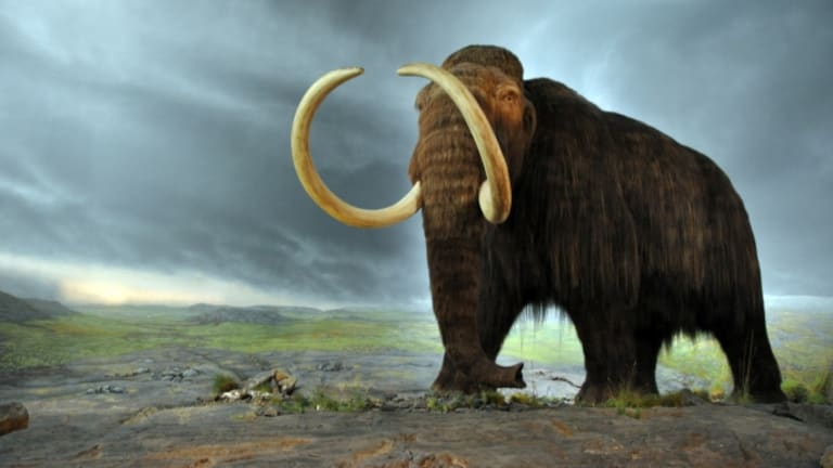 Were Humans Responsible for Killing Off the Wooly Mammoth?