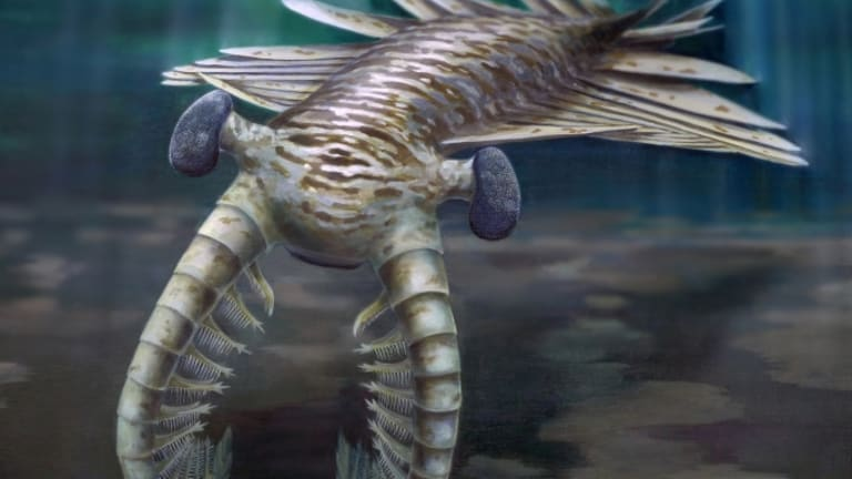 First Super Predator Was a Hawk-Eyed Shrimp, Study Shows