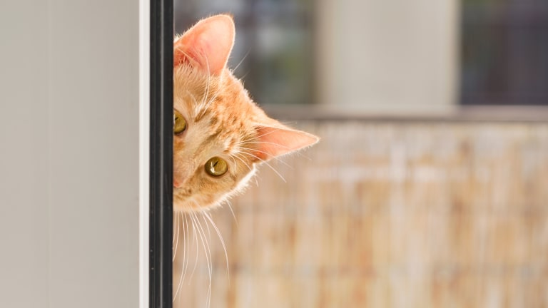 When the CIA Learned Cats Make Bad Spies