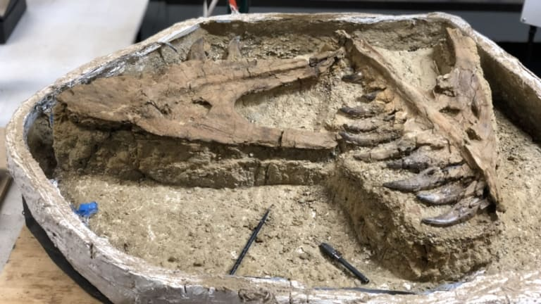 7-Year-Old T. Rex Found in Montana is a '1 in 100 Million' Discovery