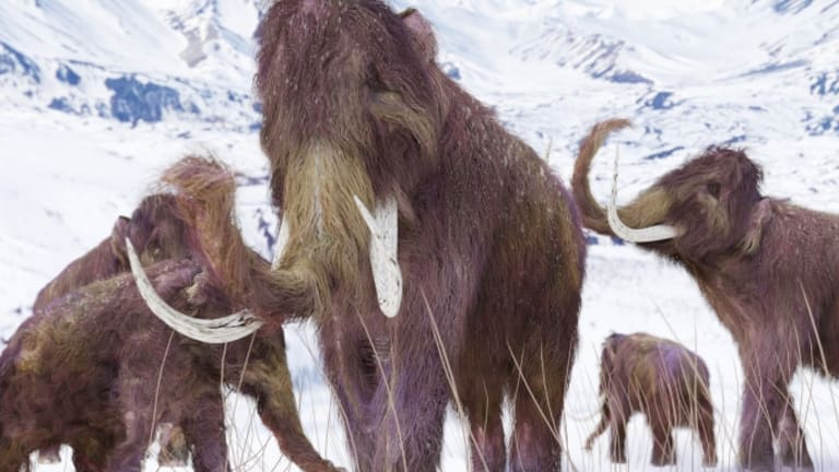 Scientists Say They Could Bring Back Woolly Mammoths Within Two Years