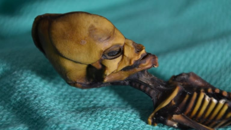 No, This Tiny Mummy Isn't an Alien