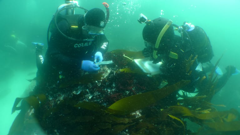 First Wrecked Slave Ship Discovery Yields Brutal Details