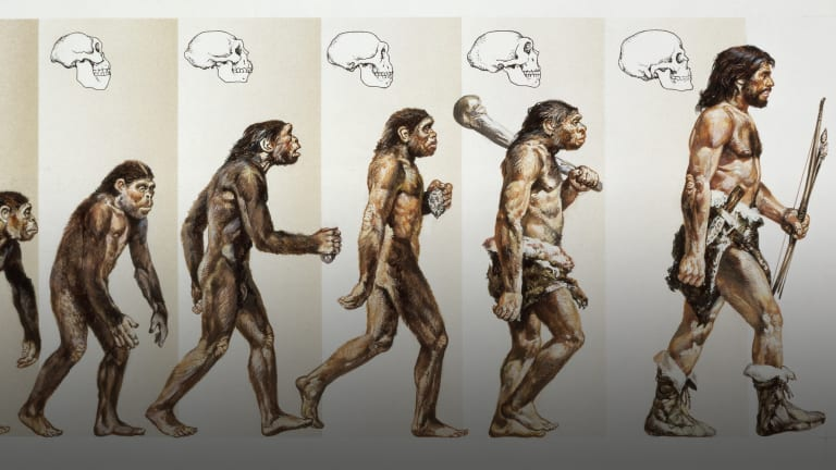 Image result for when did humans evolve?