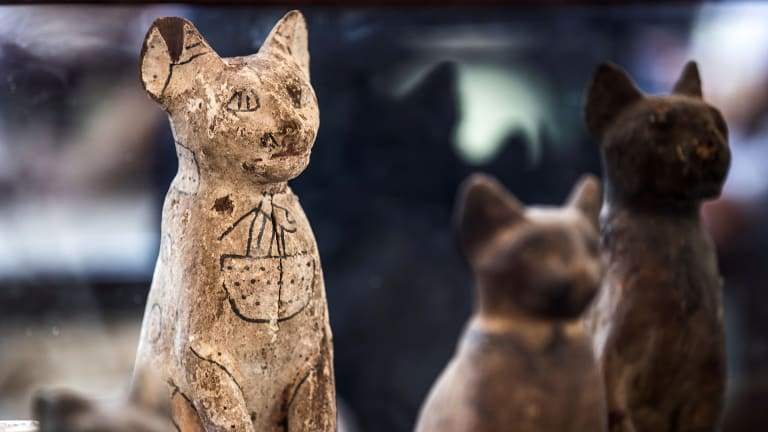 How Cats Became Divine Symbols in Ancient Egypt