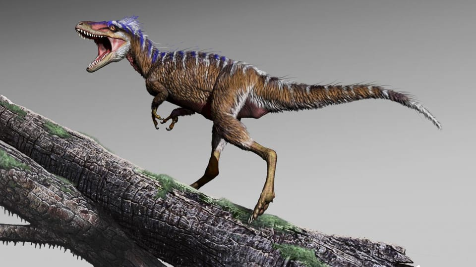 Tiny Tyrannosaur Discovery Shows T. Rex Had a Really Late Growth Spurt