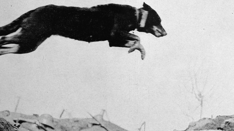 26 Photos of Dogs Being Heroes in WWI